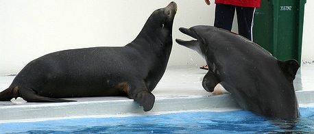 Seal vs Dolphin!
